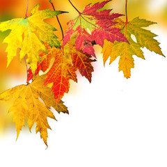 Goldener Herbst: Fallende, bunte Blätter