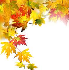 Herbst: Fallende, bunte Blätter