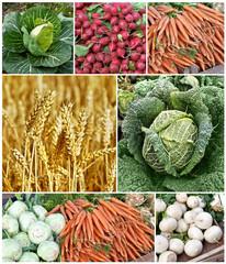 Erntezeit, Biogemüse