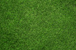 Close up of green grass texture, background with copy space - 55504592