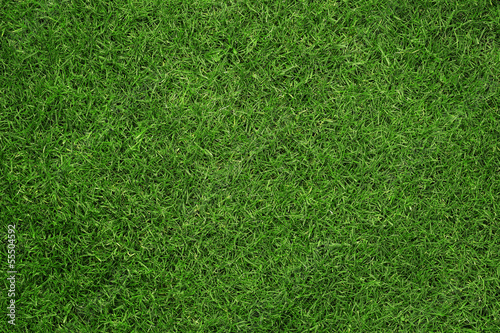 Leinwandbild Motiv Close up of green grass texture, background with copy space