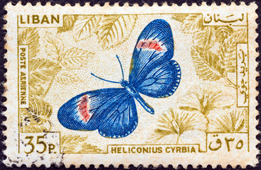 Small postman butterfly (Heliconius cyrbia) (Lebanon 1965)