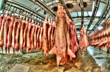 Fresh meat in a cold cut factory