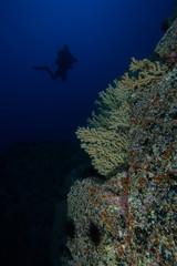 Ambiente submarino - Las Gerardias