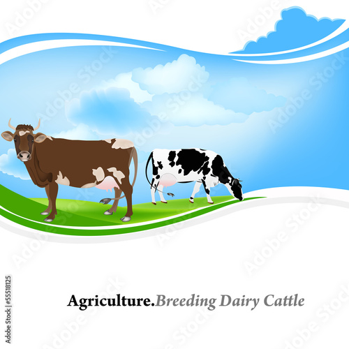 Farm animal,Agriculture.Breeding dairy Cattle.Vector background