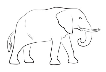Elephant on white background