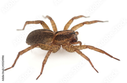 Live spider isolated on white background with shadow