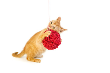 Kitten playing playing with ball of wool
