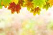 Herbst 55