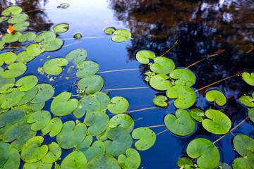 Waterplant  leafs