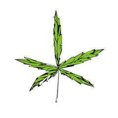 Marijuana cannabis leaf vector illustration