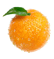 Fresh oranges covered with water drops. Foods and Dishes Series.