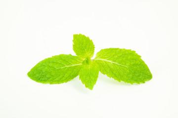 peper mint