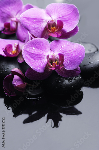 still life with pink orchid on pebbles with reflection