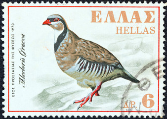 Rock Partridge (Alectoris Graeca) (Greece 1970)
