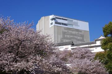 保存修理中の姫路城と桜