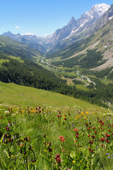 Ferret Valley covered by flowers and Mont Blanc