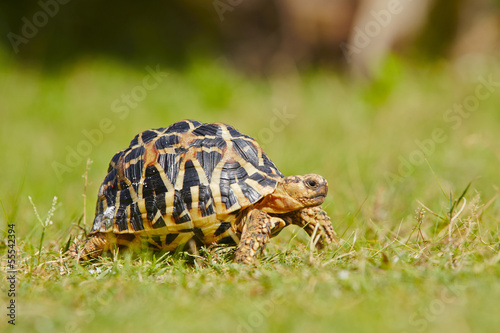 Papiers peints Tortue Turtle