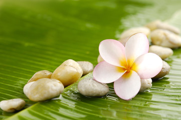 Plumeria and set of pile of stone on banana leaf