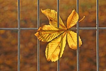 Herbst - Zaungast