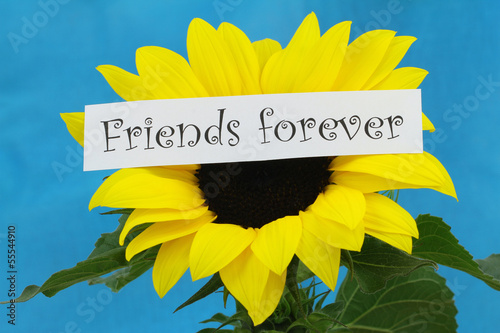 Friends forever card with sunflower on blue background