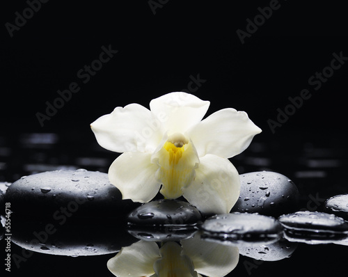 white orchid on pebble reflection