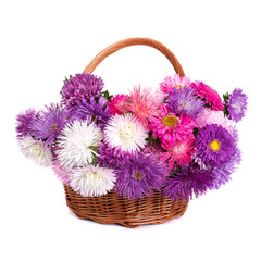 wicker basket with beautiful flowers asters isolated on white