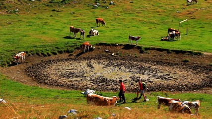 People and cattle on the mountain.