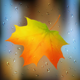 Autumn orange vector leaf on wet glass
