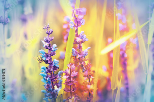 Purple flowers in a meadow