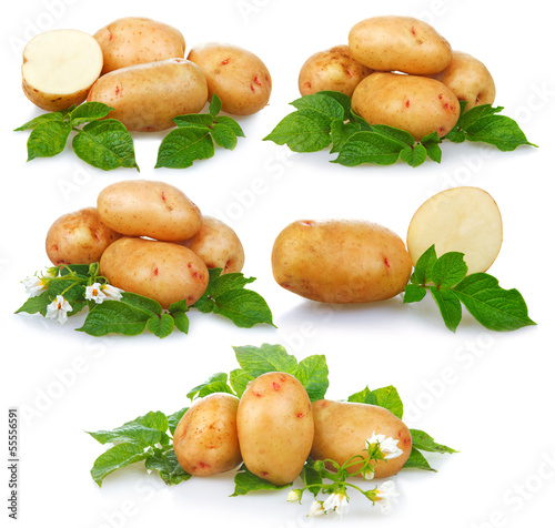 Set of ripe potatoes vegetable with green leafs isolated