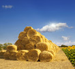 Haystack and sunflowers