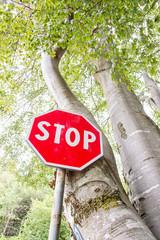 Cartello Stop nel bosco