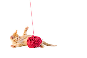 Cute kitten playing with ball of wool