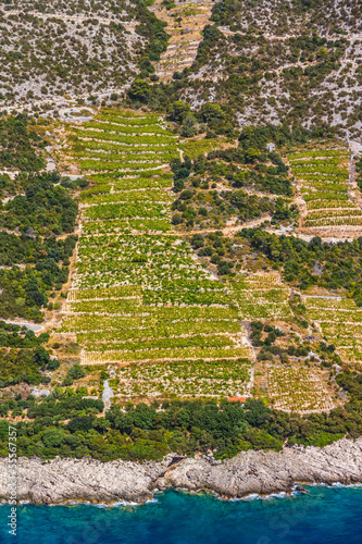 Foto op Plexiglas Indonesië Dingac vineyards on Peljesac peninsula