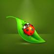 Ladybug on green leaf, vector