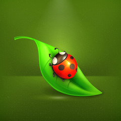 Ladybug on green leaf, vector