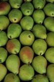 Pears - 55572700