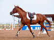 Red sports horse