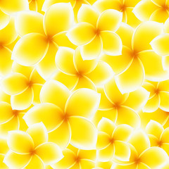 Plumeria, Frangipani pattern (background). Asian yellow flower