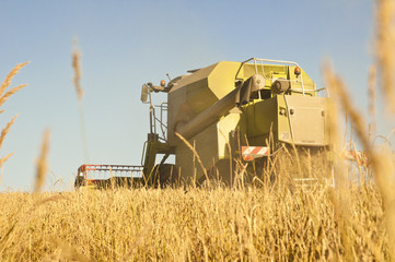 combine harvesting wheat in summer afternoon