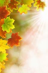 Herbst 37