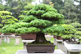 The Bonsai Garden in Suzhou, China