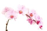Fototapety Stem of orchids.