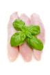 Putenfleisch roh mit Basilikum