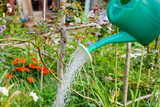 green grass watering from watering can