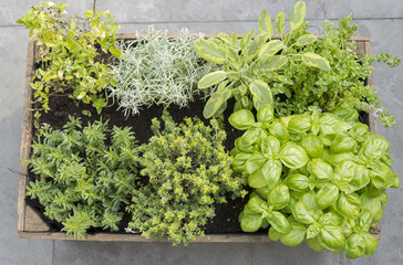 wooden container with fresh herbs