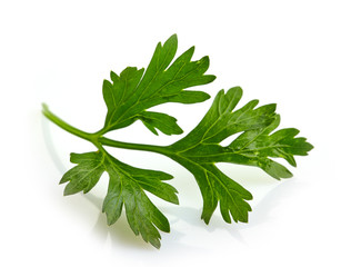 Green parsley leave on a white background