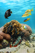 Beautiful coral with reef fish