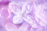 floral background with a dewy lilac